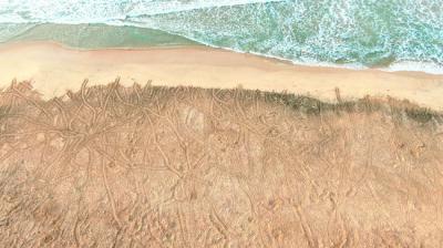 Aglomeración de rastros de hembras adultas de tortuga boba en la playa de João Barrosa, en la isla de Boa Vista (Cabo Verde). Foto: Elton Silva.