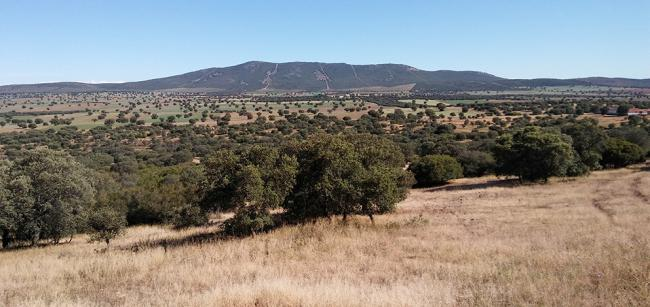 Panorámica de un sector del Campo de Montiel (Ciudad Real) que podría haber sido afectado por la minería de tierras raras (foto: José Guzmán).
