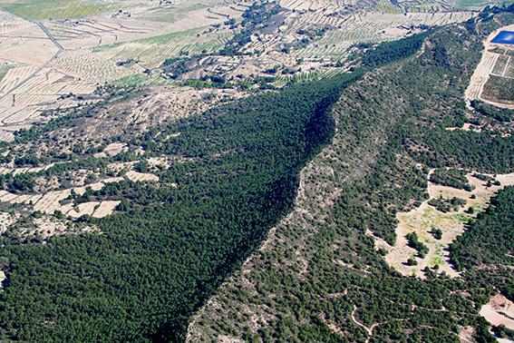 Foto aérea del cordal principal de Sierra Escalona, que se extiende por más de diez mil hectáreas en el sur de la provincia de Alicante (foto: ASE).
