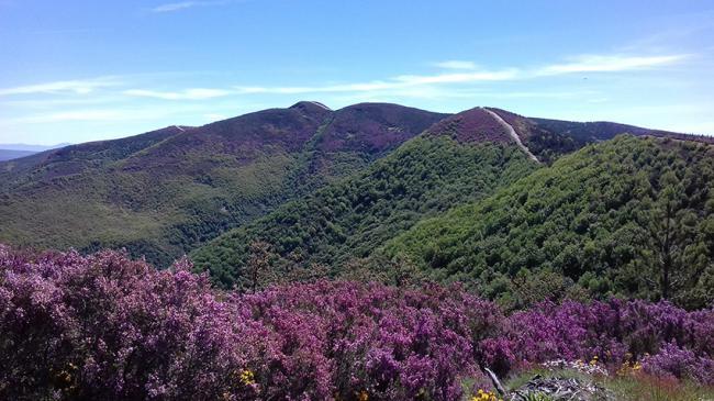 Vista parcial del cordal donde se situará el parque eólico de Barjas, en El Bierzo (foto: J. Guitián).