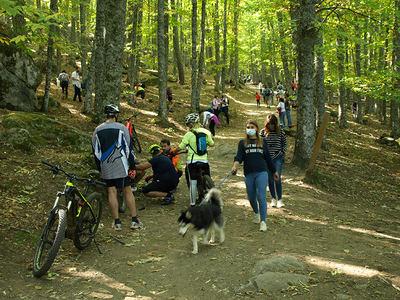 Turistas, senderistas y ciclistas se aglutinan en una de las principales sendas del Castañar de El Tiemblo, incumpliendo en muchos casos las normas establecidas en el enclave.