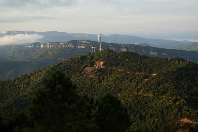 Vista panorámica de la zona de Puigcerver, donde se ha encontrado la mayor población catalana de la amenazada jara cervuna (foto: Hilari Aragonès).