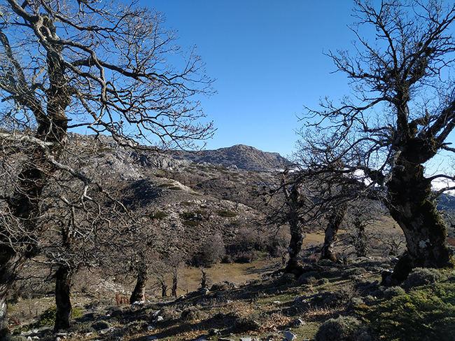 Sector de la Sierra de las Nieves (Málaga), espacio natural que muy probablemente se convierta en el decimosexto parque nacional (foto: Manuel Oñorbe).