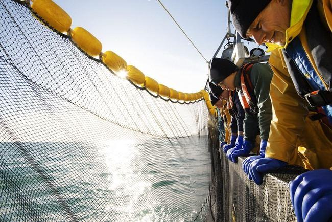 Un barco pesquero faena con sus redes en una pesquería que ha obtenido el sello internacional independiente MSC.