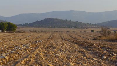 Denuncian roturaciones en una de las últimas zonas con sisón de la provincia de Alicante