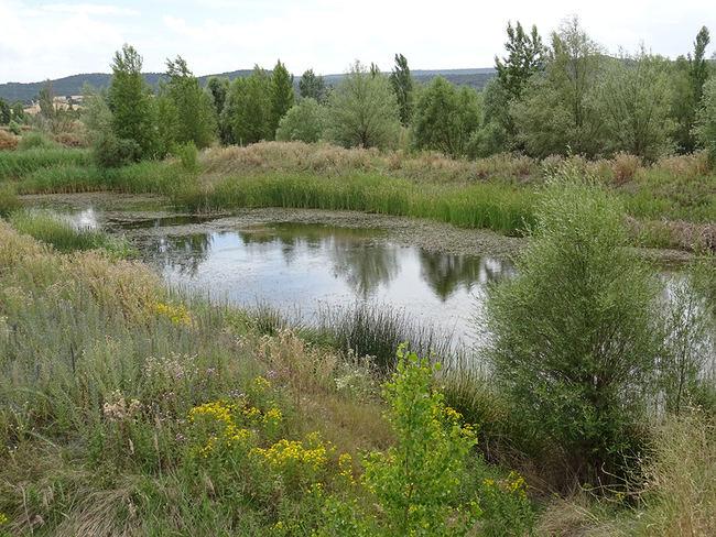 Aspecto de una de las graveras naturalizadas de Guma, en la Ribera de Duero burgalesa (foto: Jesús Abad).