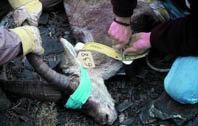 La gestión de la  cabra montés  en Andalucía
