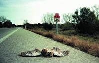 Efectos de las carreteras sobre las aves