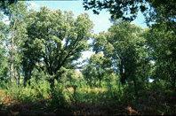 El Coto de Eira y sus  bosques aledaños