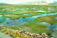 El proyecto Araucaria-Colca y la Reserva Nacional  Salinas y Aguada Blanca