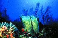 Turismo, pesca y  conservación en  el archipiélago  de Los Roques