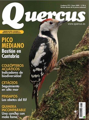 Quercus 275 / Enero 2009