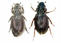 Los coleópteros acuáticos como indicadores de la biodiversidad