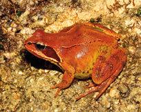 Anfibios amenazados de Galicia