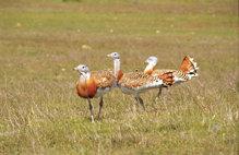 La conservación de las aves en la España de la Restauración