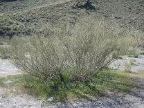 Consejos para reforestar en zonas áridas