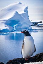 Viaje a la Antártida tras las aves del sur