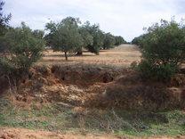 El conejo en la Campiña de Córdoba: ¿es realmente una plaga?