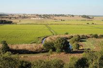 Reintroducidas con éxito águilas imperiales y pescadoras en Andalucía