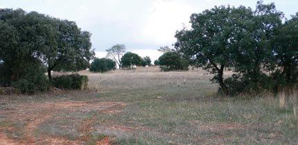 Hábitat cuyo uso por parte de las aves nocturnas ha sido estudiado en el Campo de Montiel (foto: José M. Rey Benayas).