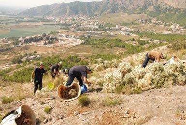 Una cuadrilla actúa en una zona de la sierra de Orihuela (Alicante) invadida por el cardenche con el objetivo de erradicar este cactus invasor (foto: Vicente Deltoro).