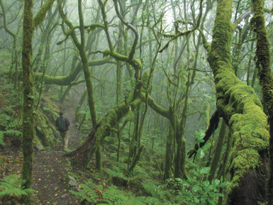 La laurisilva de nieblas, rica en plantas epífitas, conforma uno de los escenarios más misteriosos de Garajonay (FOTO: ÁNGEL B. FERNÁNDEZ).